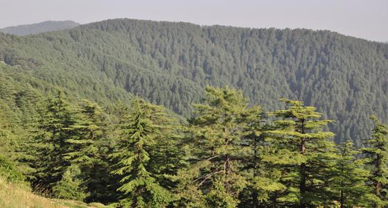 राज्य के लिये 1300 करोड़ की HP वन समृद्धि परियोजना मंजूर